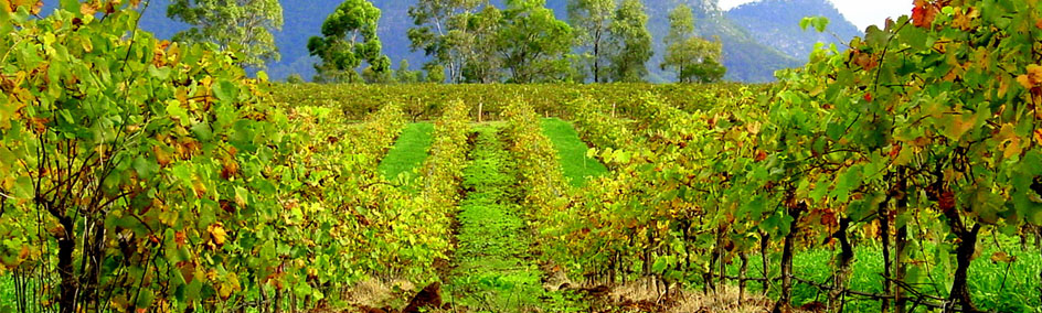 The Hunter Valley is one of the best known wine regions in Australia.